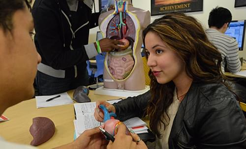 Student learning Spanish for Healthcare Professionals